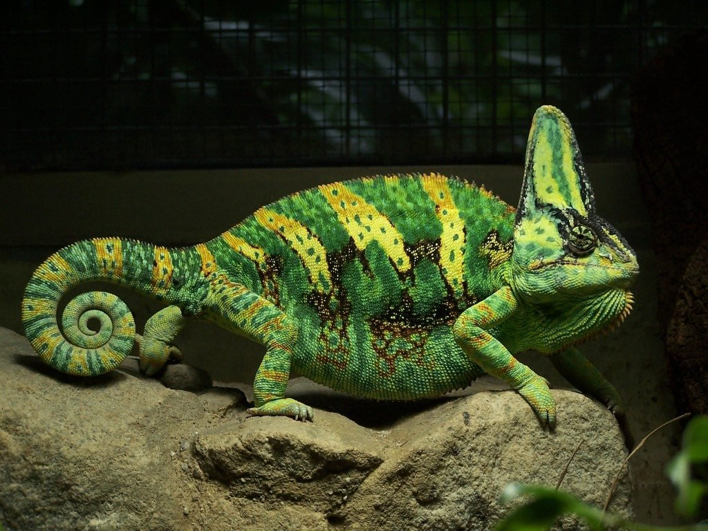 8 Best Lizard Pets If You Are The Scaly Type