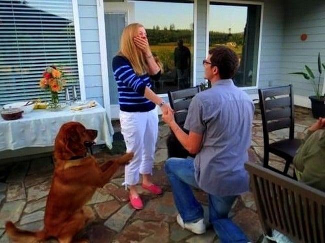man proposing with golden retriever