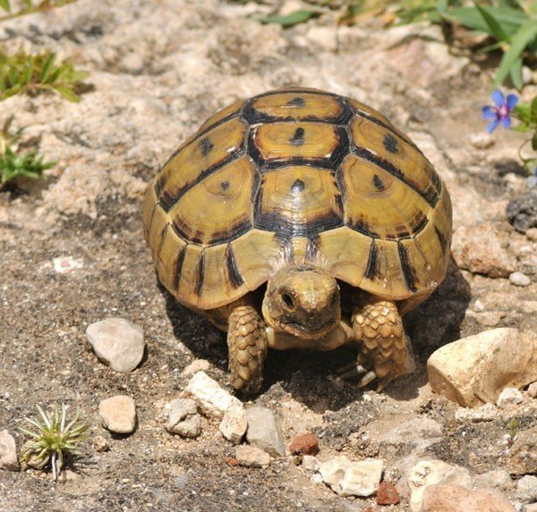 10 Types of Turtles You Can Have as Pets - Wide Open Pets
