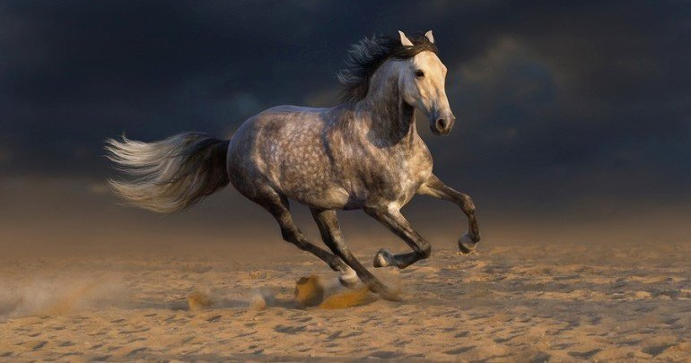 andalusian horses everything you need to know about the breed