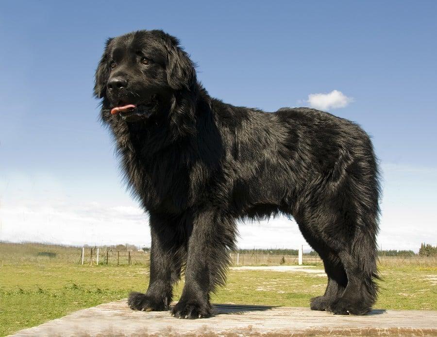 Black Big Dog Names