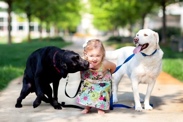 Its_a_Lab_Thing_Labradors_Kids001