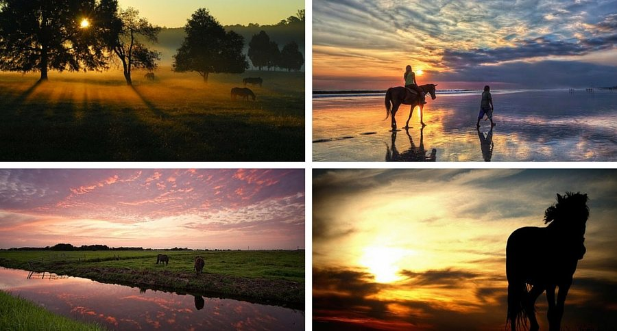 compilation of horses at sunset