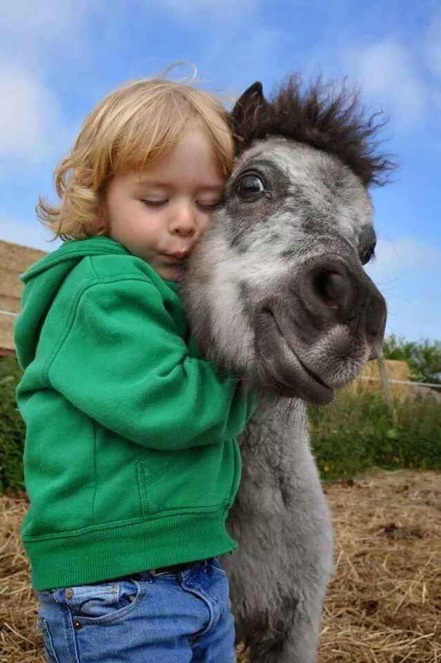 cute horse and child