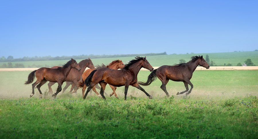 Blm Wild Horses Trained For Adoption On Colorado Sanctuary