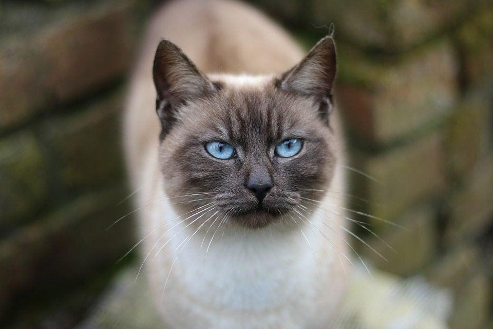 cat-1280855_960_720