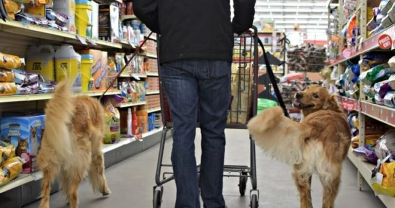 Can You Bring Therapy Dog To Store