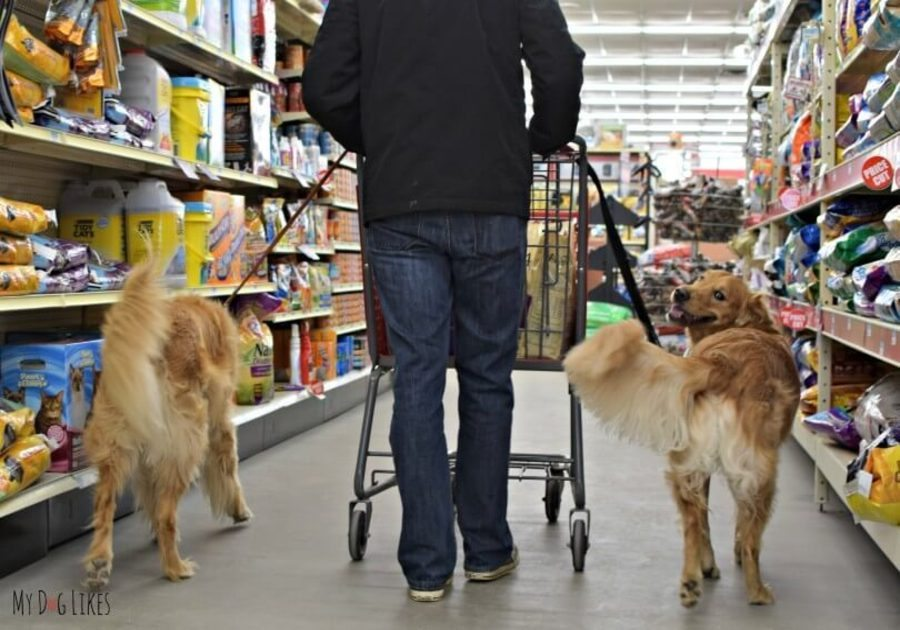 Dog Friendly Retail Chains 12 Stores That Allow You To