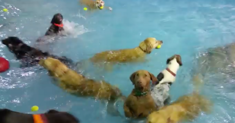 Dog pool party with uncomfortable guest.