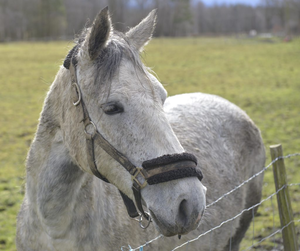 your horse is important and his name should be too