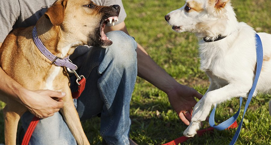 The Influence of Canine Aggression and Behavioral ...