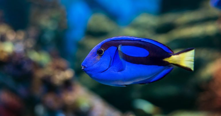 tang fish everything you need to know about this aquarium friend