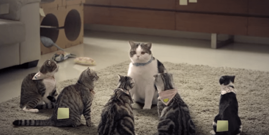thai cat commercial