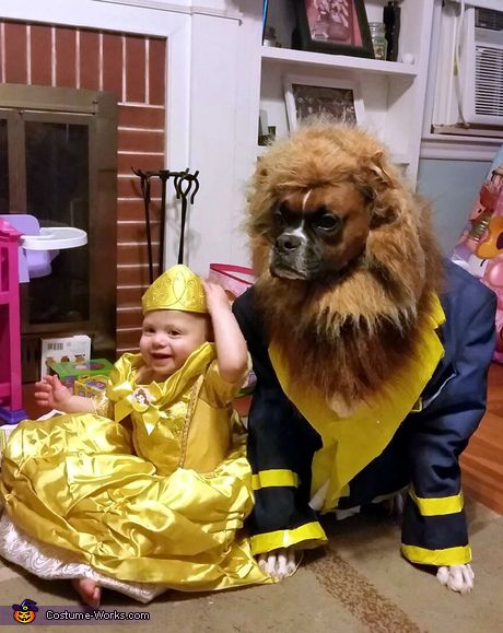 beauty and the beast dog halloween costume