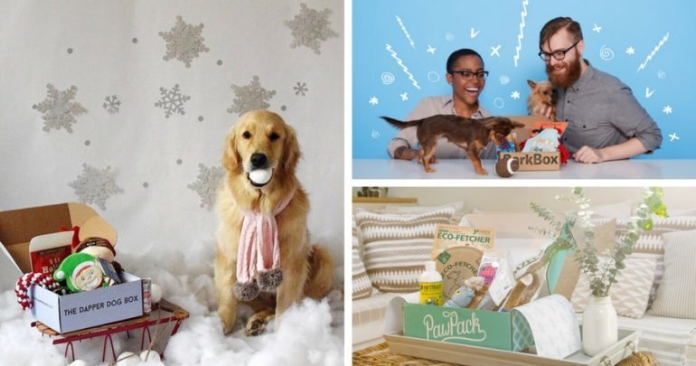 Collage of different dog subscription boxes