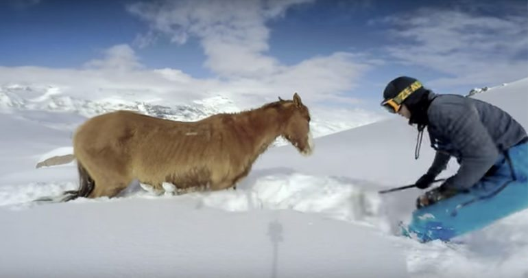 horse rescue from snow