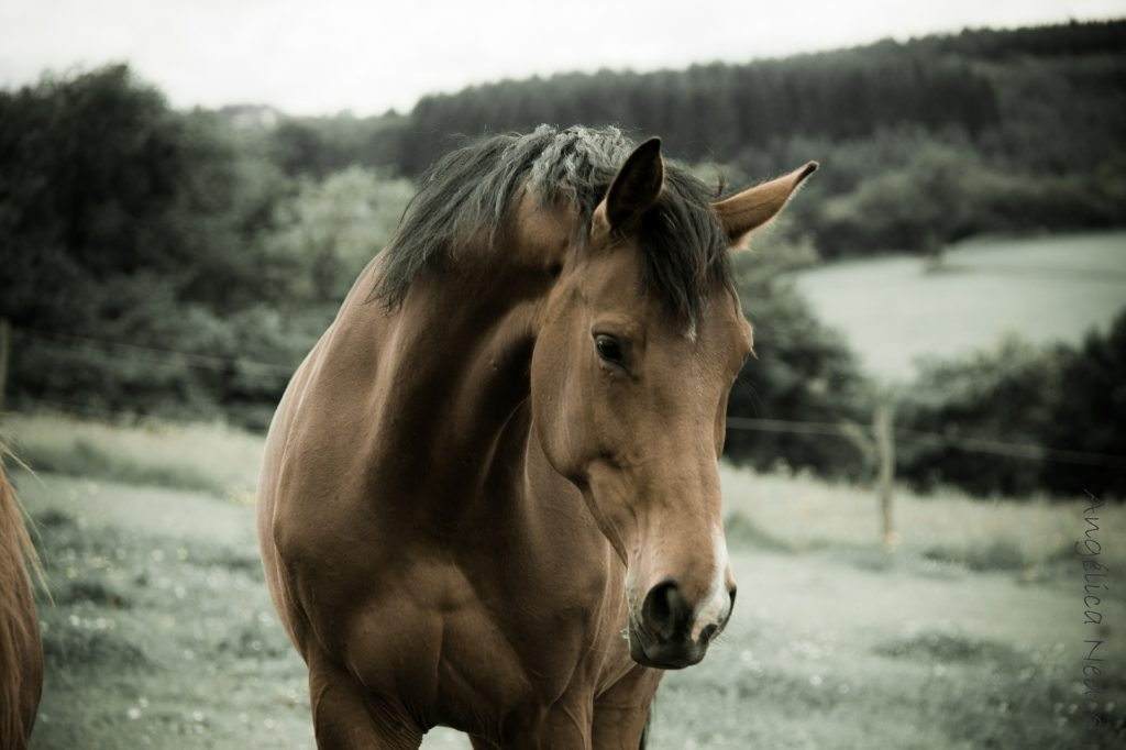 horse with grey background