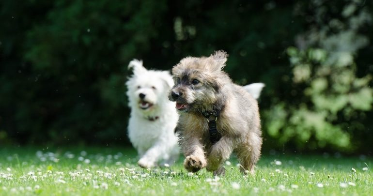 two dogs running outside