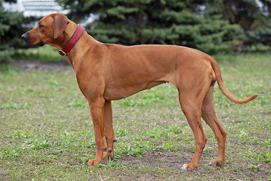 Best Large Mixed Breed Dogs