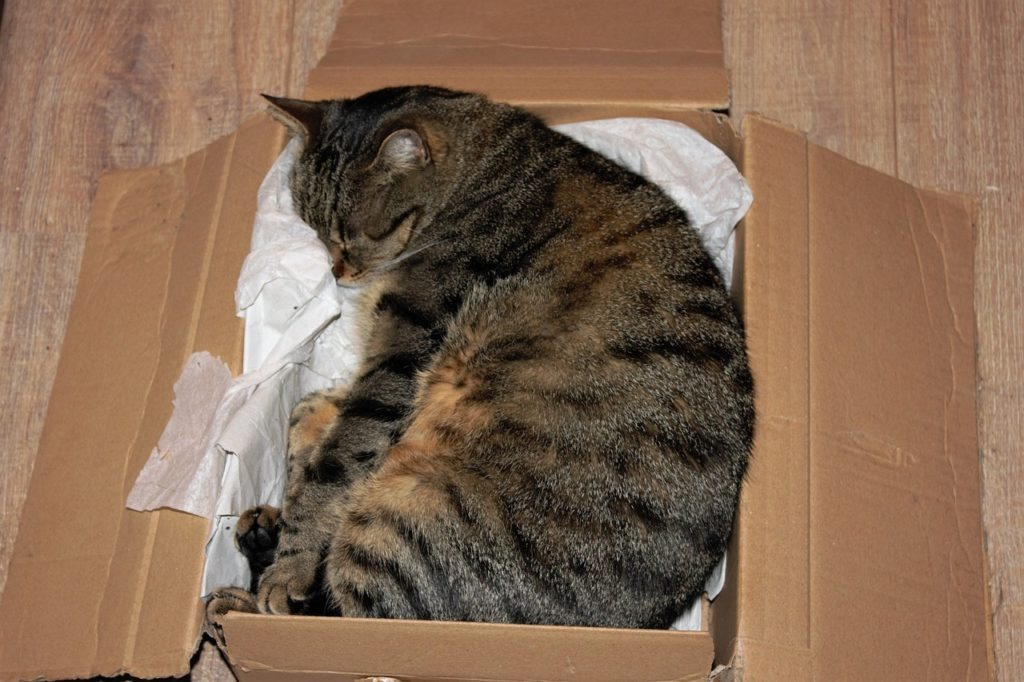 cat sleeping in box