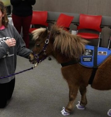 College student with miniature horse