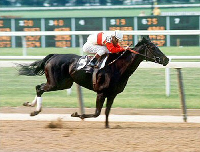 Image result for 8 Facts to Consider Before Providing Drinking Water to Your Race Horse!
