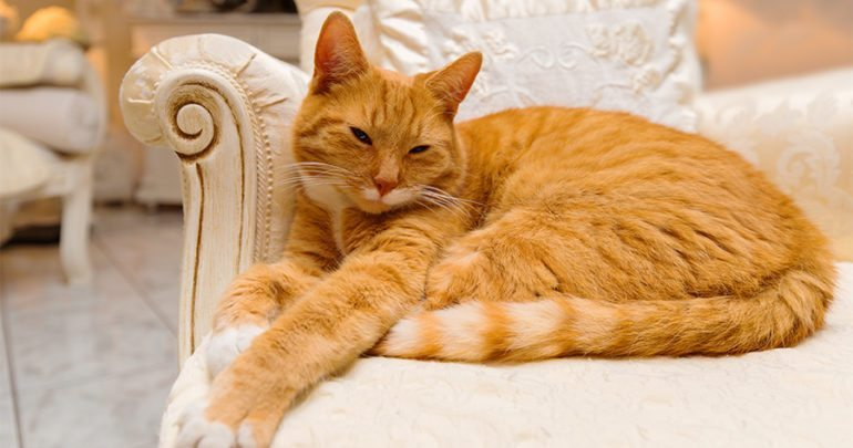7 Over The Top Products For The Most Spoiled Of Kitties