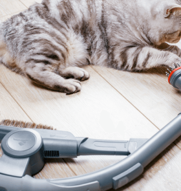 cat playing with vacuum cleaner