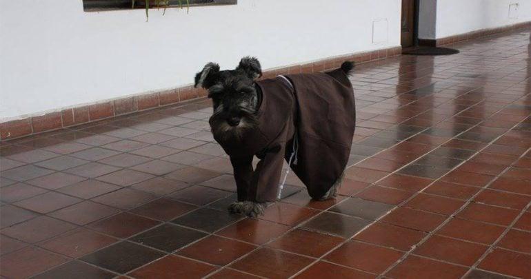 monastery dog