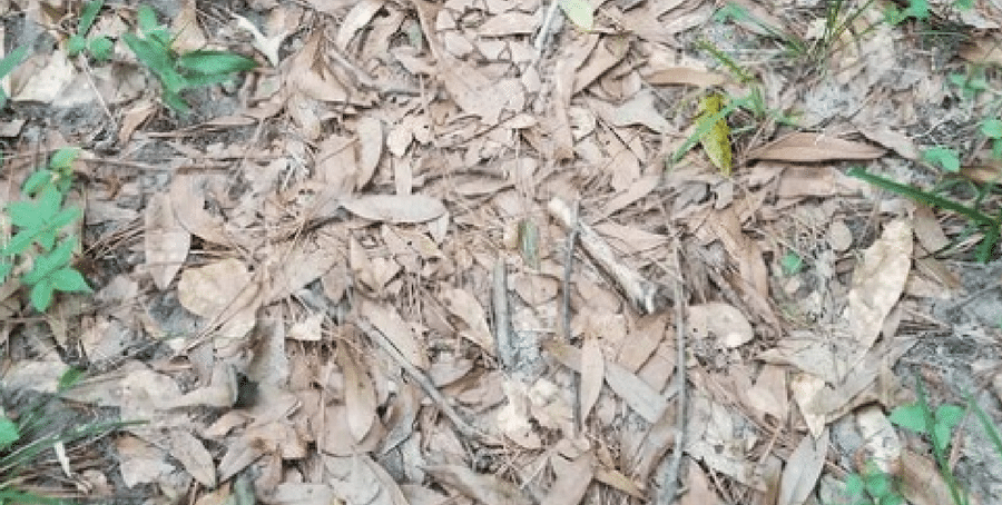 Herpetologist Posts Picture of Snake on Twitter But Nobody Can Find It