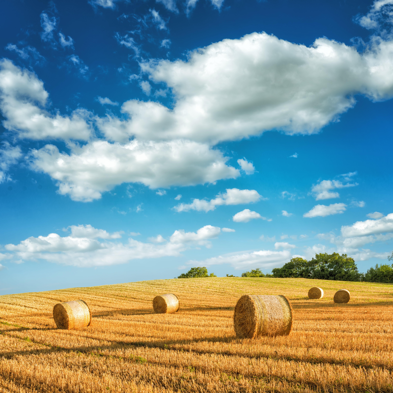 Hay in a meadow, fabulous landscapes