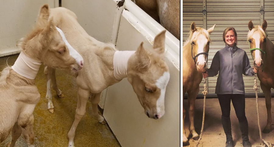 A Fairytale Ending for Bonnie and Clyde, Rare Horse Twins Born in Texas
