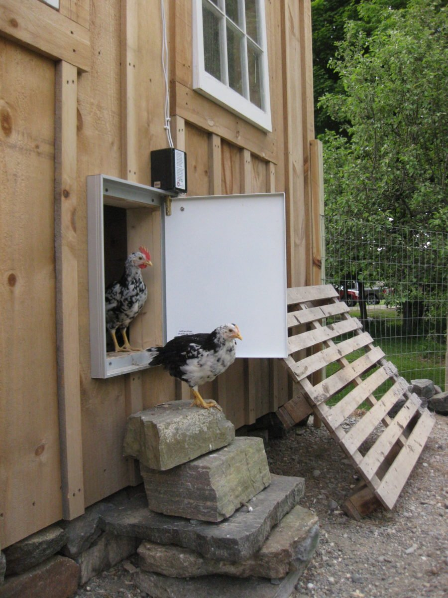 The Ultimate Checklist To Have The Best Chicken Coop In