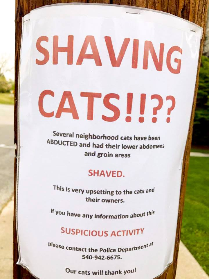 shaving cats flyer
