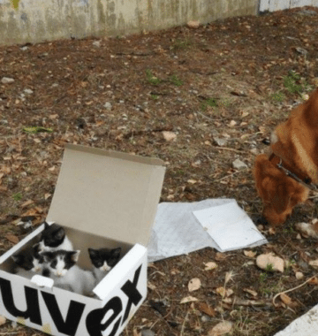 dog finds box of kittens
