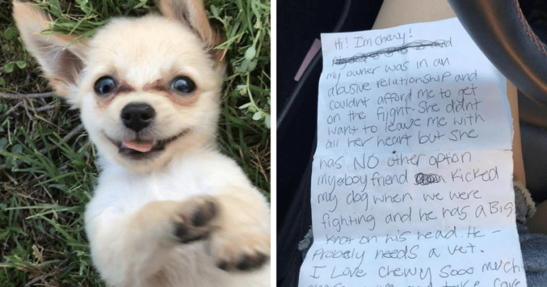 Chihuahua puppy abandoned with note