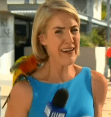 parrot lands on reporter