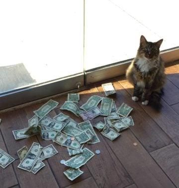 cat money