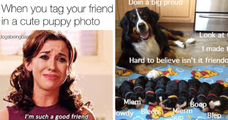 dogs instagram