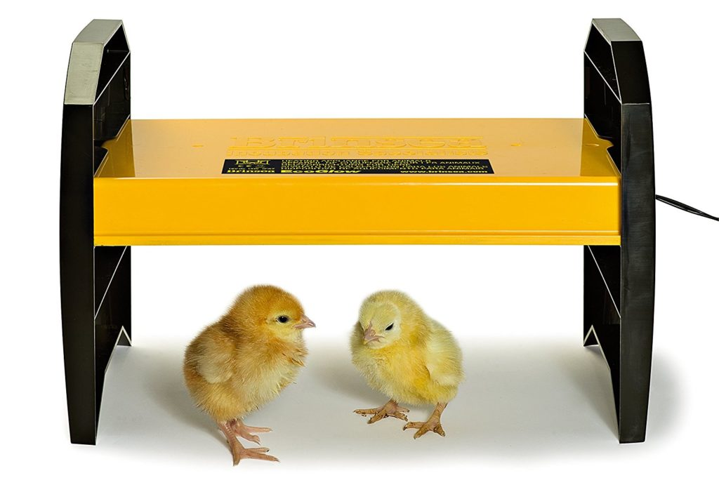 how to set up a heat lamp for baby chicks
