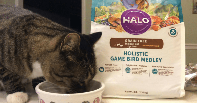 cat eating Halo cat food