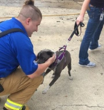 puppy hides in couch during fire