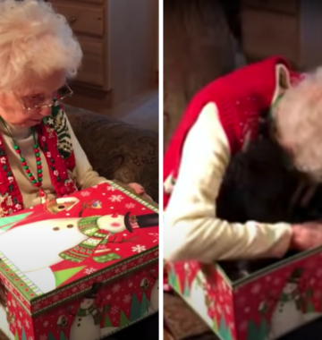 Grandma Gets Christmas Kitten