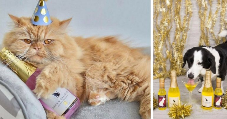 champagne for cats and dogs