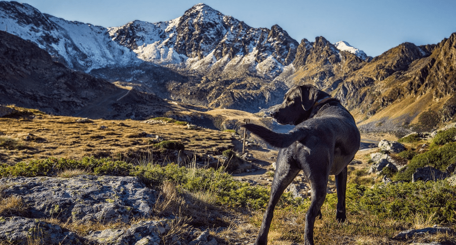 dog and mountains