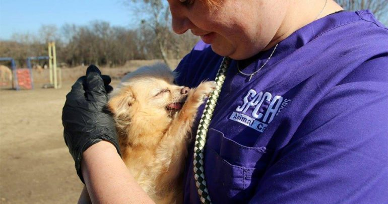 SPCA rescues dogs from puppy mill