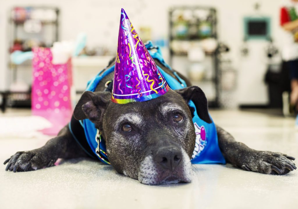 senior dog adoption