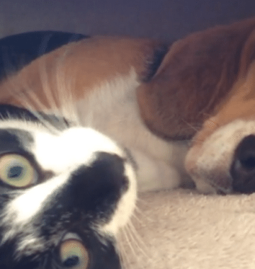 dog and cat make friends