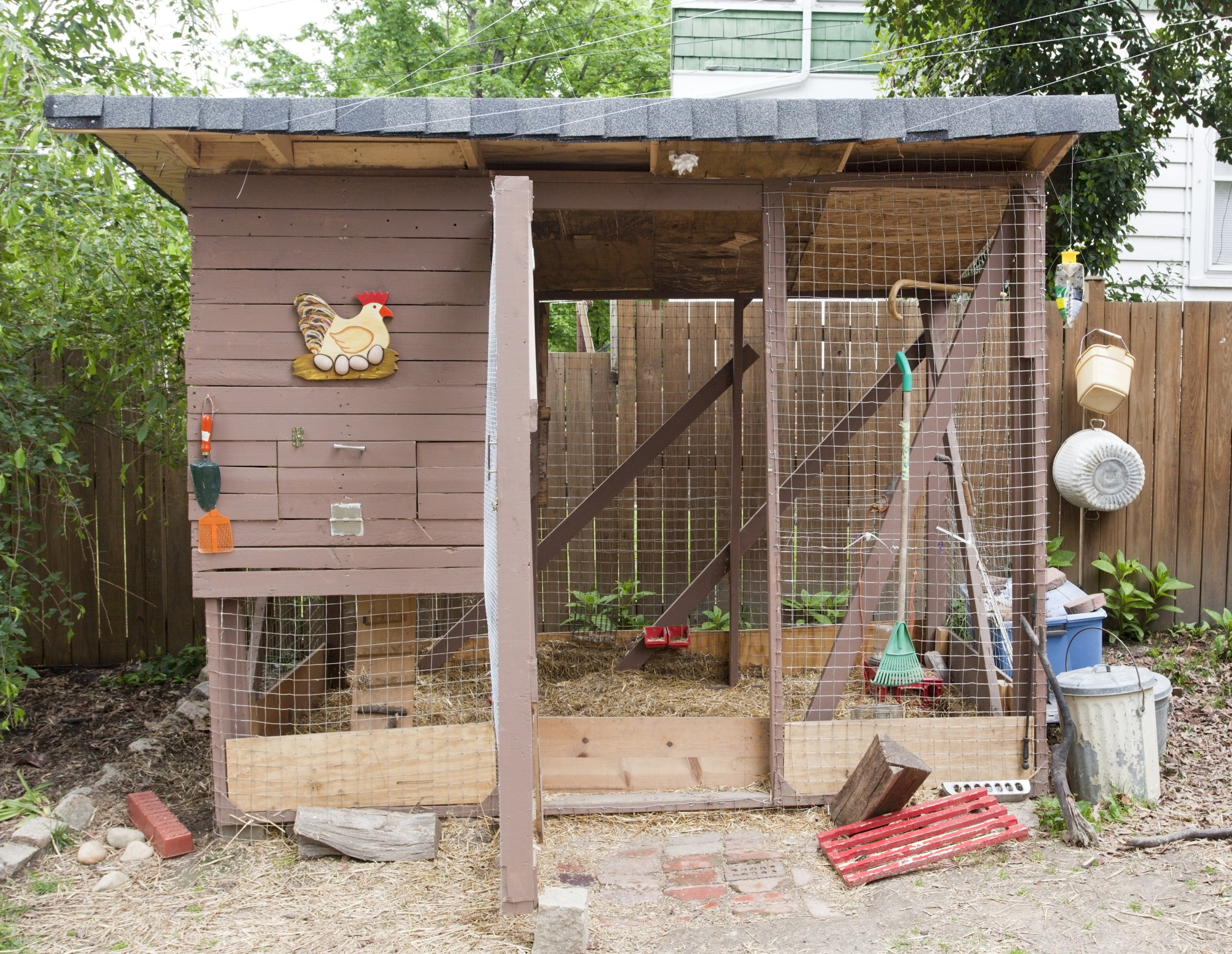 Urban backyard chicken coop. Horizontal.