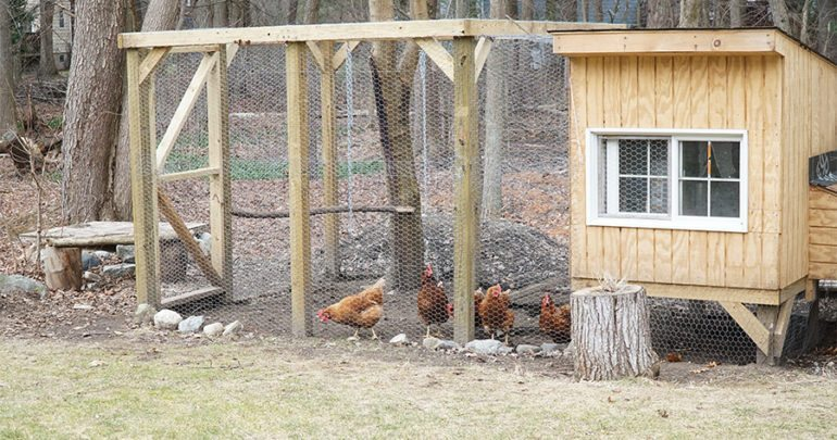 chicken coop in back yard in residential area
